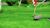Lawn mower worker cutting grass video
