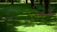 Lawn mowing in a park video