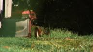 Lawnmower 03 video