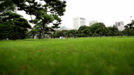Lawns and People Having a Picnic video