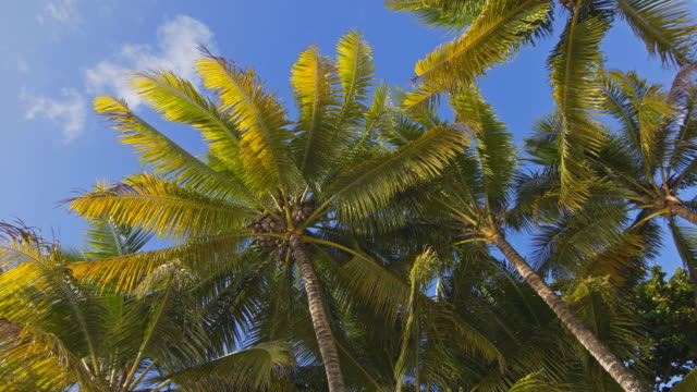 Laying on beach and looking up at coconut palm trees video
