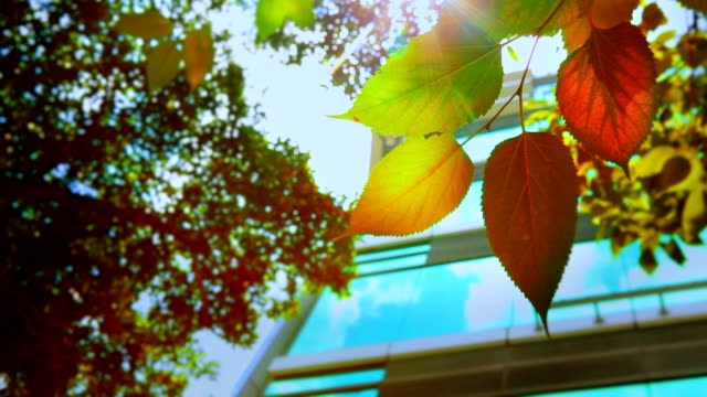 Leaf and business building video