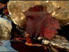 Leaf and Water video