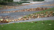 Leaf blowers. video