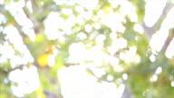leaf blurred shining background video