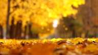Leaf fall in the autumn city park. Beautiful background video