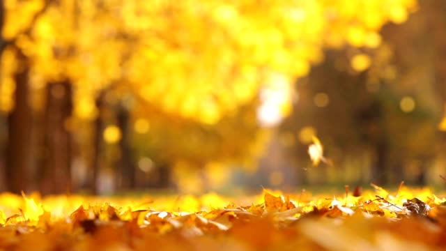 Leaf fall in the autumn city park. Beautiful natural background video