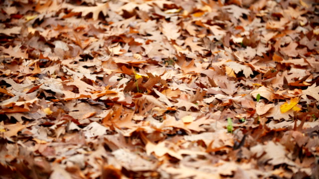 Leaf fall in the autumn city park. video