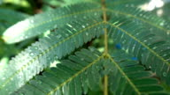 Leaf with drop of rain water with green background video