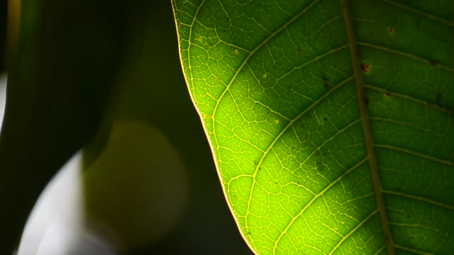 Leaf with light video