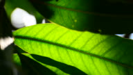Leaf with sunlight video