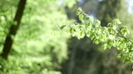 leaves against the morning sun video
