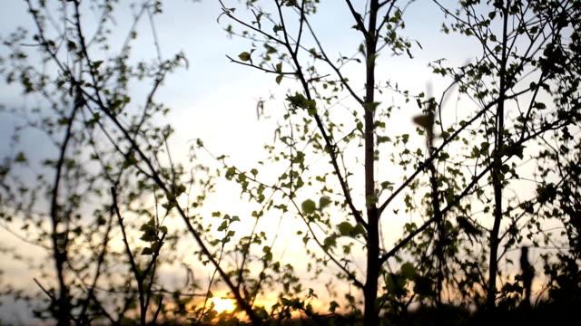 Leaves at dusk video