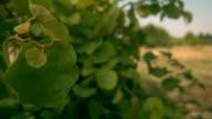 HD - Leaves Billowing video