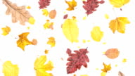 Leaves falling down on white background video