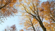 HD SLOW MOTION: Leaves Falling From Trees video