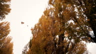 Leaves falling from trees video
