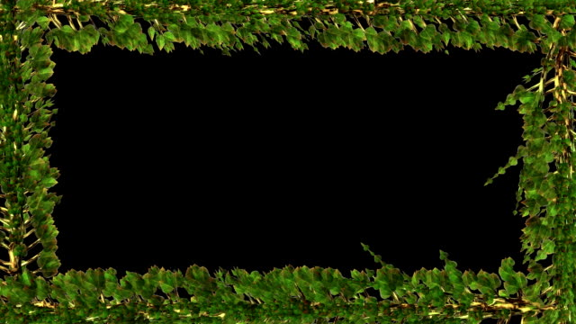 Leaves frame growth, Alpha included video
