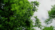 Leaves isolated on the sky and clouds background 3 axis stabilized medium shot video