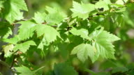 Leaves moving with a light breeze under sunlight video
