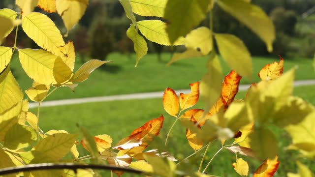 Leaves of Autumn video