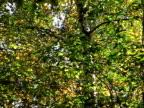 Leaves on a tree video