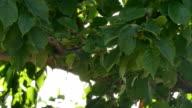 leaves on the tree video