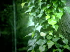 Leaves on Trunk video