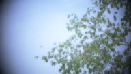 Leaves Swaying in the Breeze video