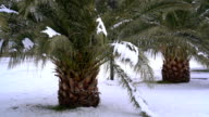 Leavs of palm trees covered with snow video