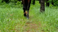 Legs of horse walk in green grass as it approaches in slow motion. video