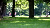 leisure summer activity and dog in a park scene video