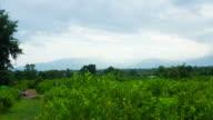 Lemon garden mountain and cloud in Chaingmai, Thailand. video