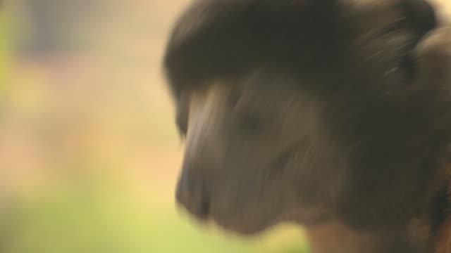 Lemurs in tree HQ 4:2:2 video