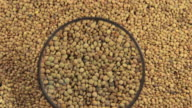 Lentils and a magnifying glass video