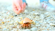 let big Hermit crab go video