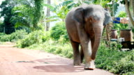 Let out of the enclosure for a stroll video