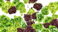 Lettuce background video video