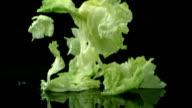 Lettuce falling and splashing, slow motion video