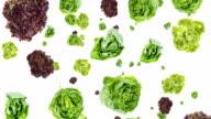 Lettuce falling down video