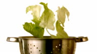 Lettuce falling into colander on white background video