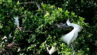 Life of egret video