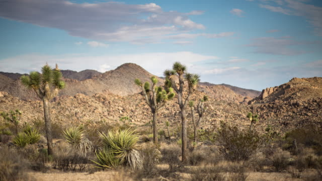 Light and Shadow Over Joshua Tree National Park - Time Lapse video