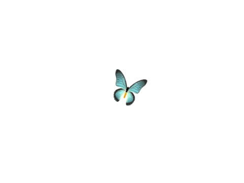 Light Blue Butterfly (PAL) video