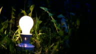light bulb surrounded by grass video