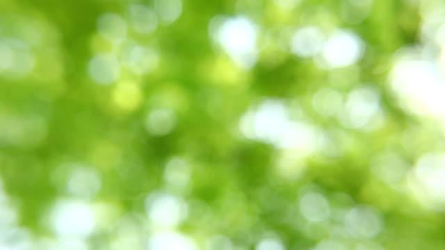 light green video