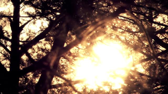 Light - Natural Phenomenon video