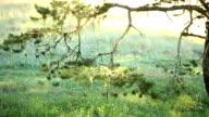 Light Reflection on tree video