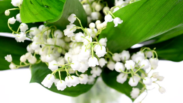 Lilies of the valley in a vase video