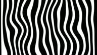 Line Zebra Movement Background video